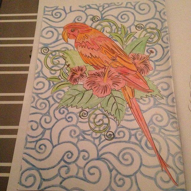 Instagram media acrazylady - #kleurinhetklein #denksport #papegaai #bloemen