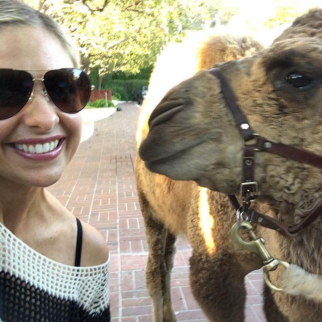 Instagram media sarahmgellar - I just went to pick up my daughter from #kindergarten and this #camel was in the parking lot. Totally normal rt?? #onlyinlosangeles
