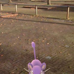 Rare dieren lopen er nu op de veemarkt rond in Doetinchem #pokemongo