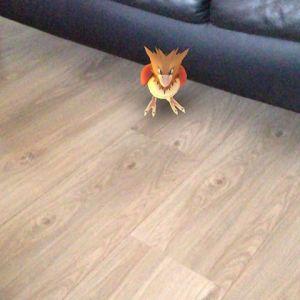 Hè @lindangerous84 je had last van een huisdier. Heb hem maar gevangen voor je #pokemongo