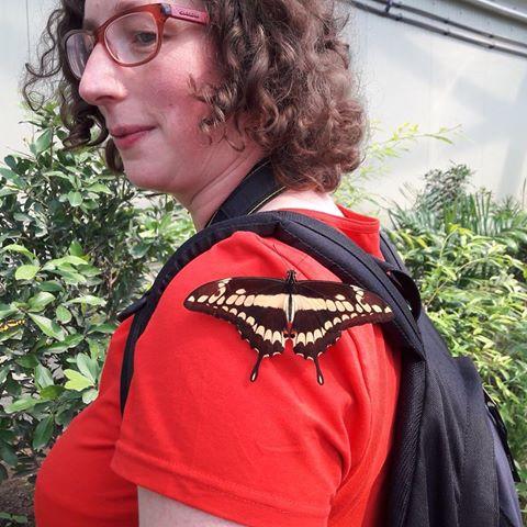 Vlinder #magrove #burgerszoo